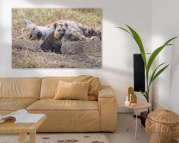 Junge Hyäne am Bau von Angelika Stern