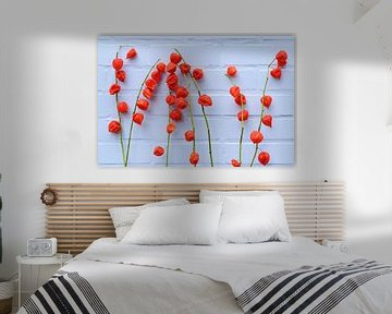 Lampionbloemen voor de blauwe muur van Ulrike Leone