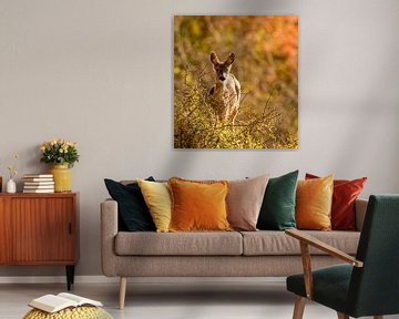 Hirsche im Herbstwald von Marjolein van Middelkoop