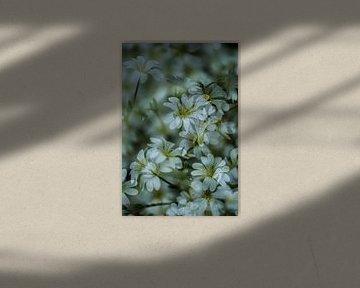 Blumen Meer von Ruud Overes