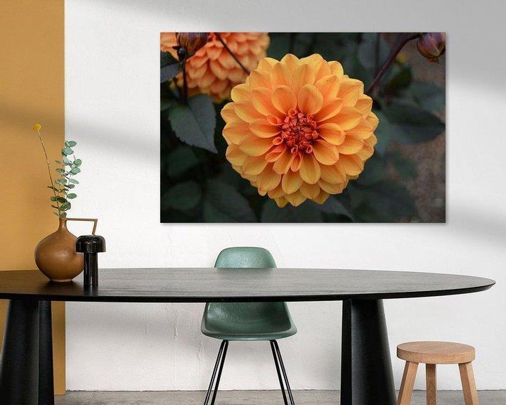 Sfeerimpressie: Chrysanthemum, Oranje van Patricia Leeman