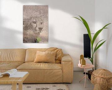 Geist des Geparden von Bobsphotography