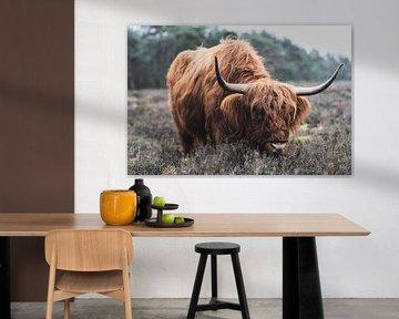 Porträt einer schottischen Hochlandkuh in der Natur von Sjoerd van der Wal