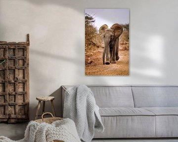 Junger Elefant, Südafrika von W. Woyke