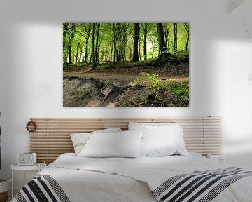 mooi bospad van Ostsee Bilder