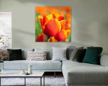 Orangefarbene Tulpe von Remco-Daniël Gielen Photography