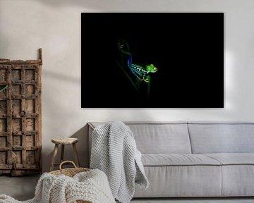Boomkikker in de nacht, Costa Rica van Tessa Louwerens