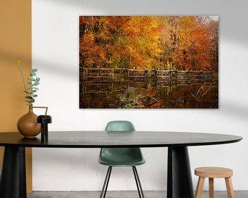Herfst in Nederland, mooie bomen met oranje en gele bladeren getooid van Jacoline van Dijk