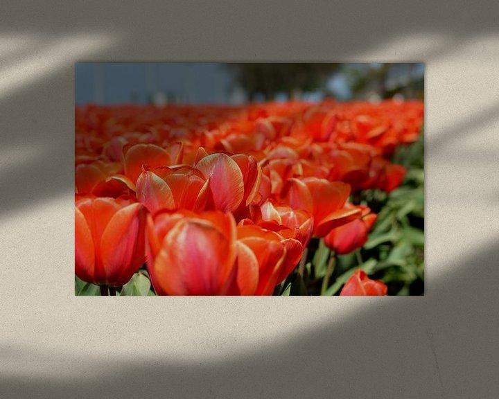 Sfeerimpressie: Tulpen veld, Rood van Patricia Leeman