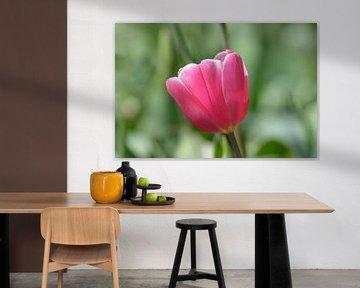 Tulp, roze van Patricia Leeman