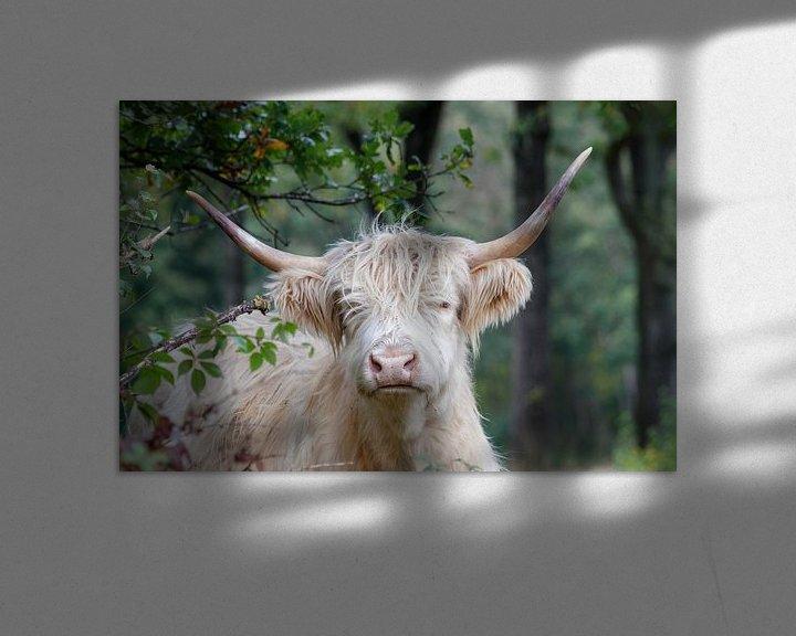 Beispiel: Blonde schottische Hochlandbewohnerin von Anjo ten Kate