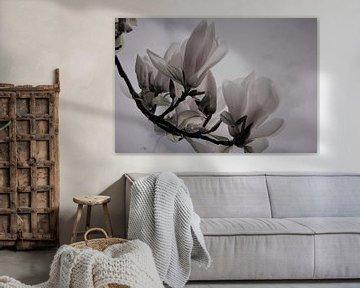 Gros plan sur le magnolia