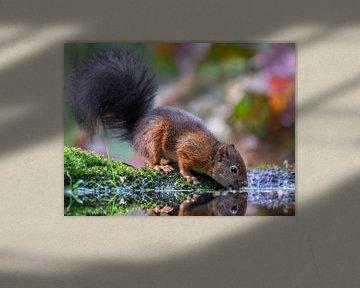 Autumn squirrel van Linda Raaphorst