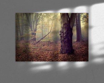 Sfeervol mistig herfstbos tafereel van Peter Bolman