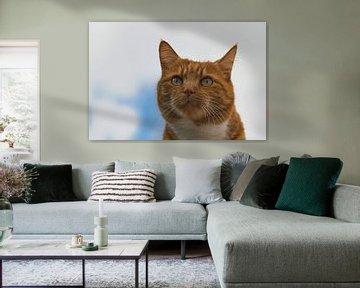 Wie Katzen aussehen können von J..M de Jong-Jansen