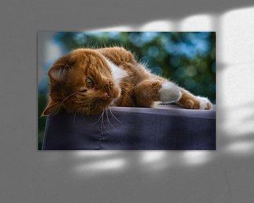 Rot-weiße Katze entspannt sich auf einem Dach von J..M de Jong-Jansen