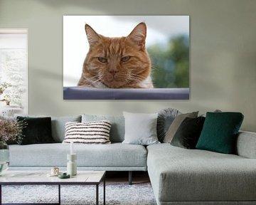 Porträt eines Haustiers von J..M de Jong-Jansen