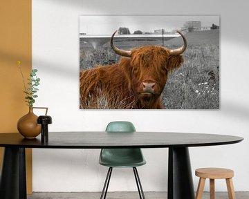 Schotse hooglander close up van Patrick Verhoef