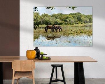Pferde im Wasser von Dokra Fotografie
