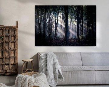 De lichtstralen worden prachtig gevormd door de bomen van Studio de Waay