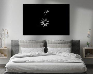 Schwarze und weiße Blume von Milou Hinssen