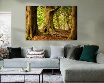 Oude bomen van Halma Fotografie