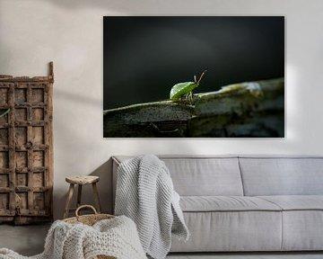 Grüner Käfer von Jouke Wijnstra Fotografie