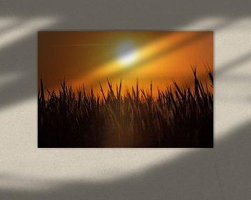 Sonnenuntergang über dem Feld