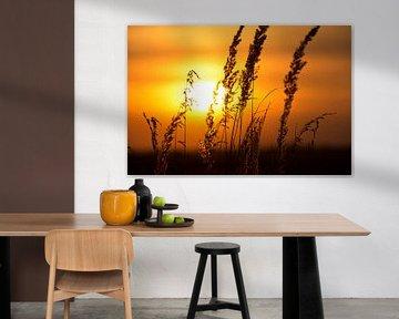 Zonsondergang achter het korenveld
