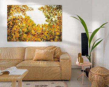 Gouden herfst - kleurrijk bladerdak van Jonathan Schöps | UNDARSTELLBAR