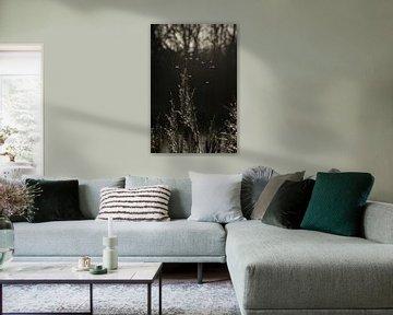 Zwart-wit silhouet van Heleen Middel