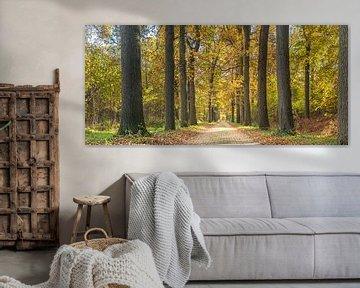 Wassenaarse bos de Horste met herfst van Jelmer Laernoes
