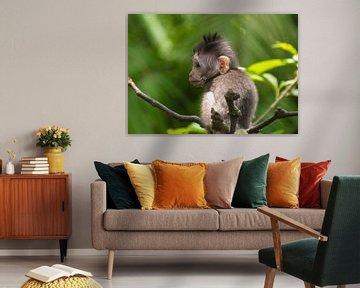 Süßer Affe von Tomasz Baranowski