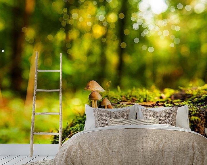 Sfeerimpressie behang: Paddestoelen in het Bos van Brian Morgan
