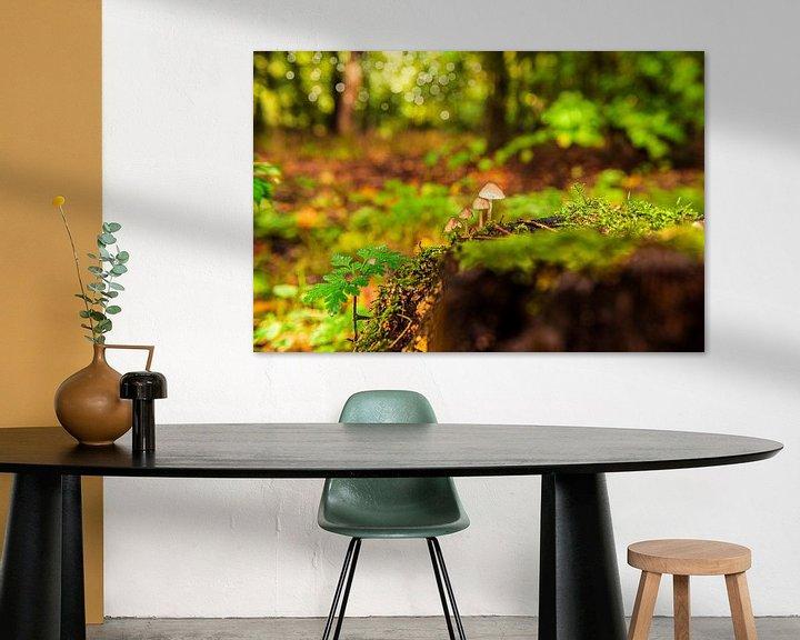 Sfeerimpressie: Paddestoelen op de bosgrond. van Brian Morgan