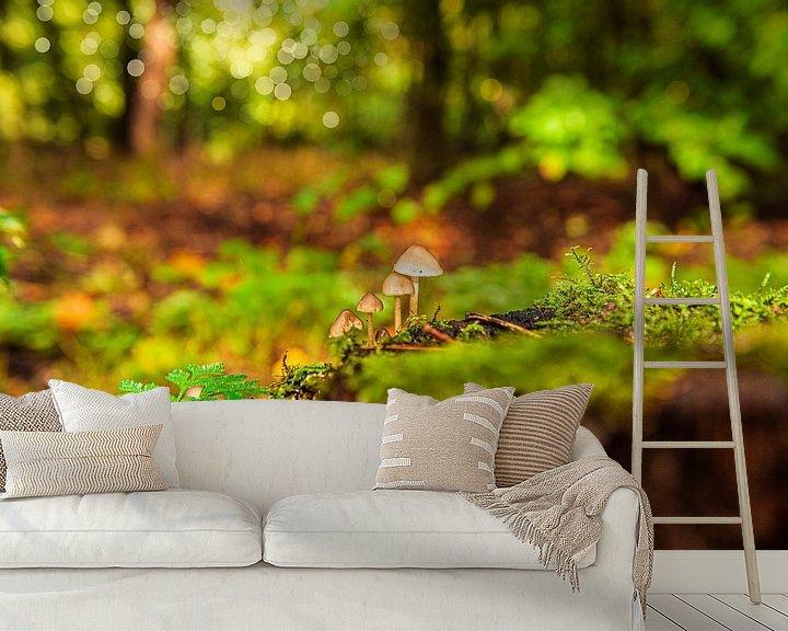 Sfeerimpressie behang: Paddestoelen op de bosgrond. van Brian Morgan