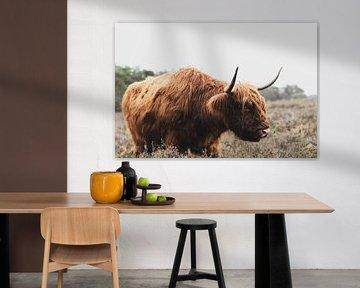 Portret van een Schotse Hooglander in de natuur van Sjoerd van der Wal