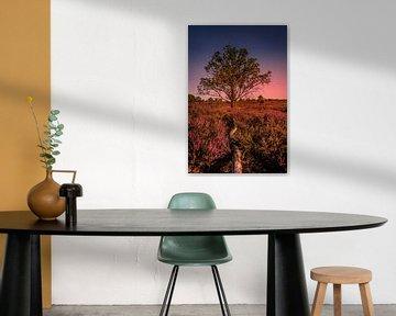 Sunset on the heather van Wim van D