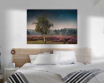 Summer purple heather van Wim van D