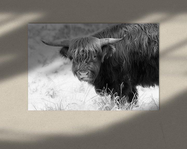 Sfeerimpressie: Schotse Hooglander van Rob Christiaans