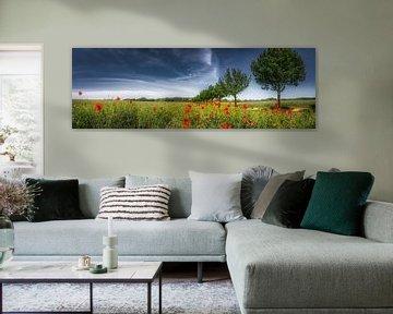 Feld mit Mohnblumen im Sommer von Fine Art Fotografie