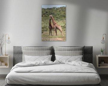 Les girafes ensemble en Afrique du Sud sur Kim de Groot