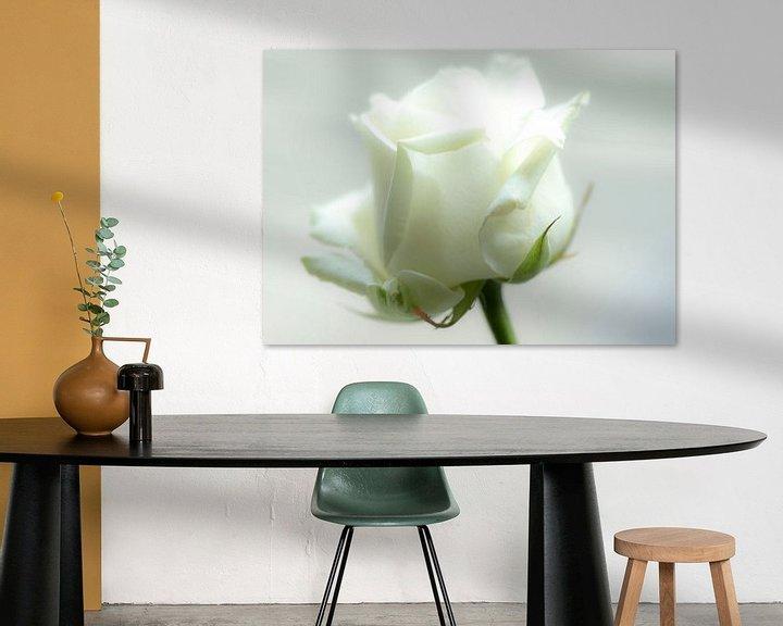 Sfeerimpressie: Witte Roos van hetty'sfotografie