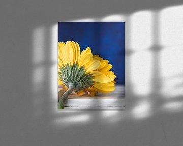 Gelbe Gerbera-Blüte von Maaike Zaal