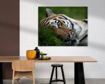 Rastender Tiger behält alles im Auge von Patrick van Bakkum