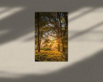 Bospad tijdens de zonsopkomst op de Brunssummerheide van John van de Gazelle