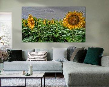 Zonnebloemen van Tineke Visscher