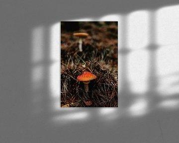 Rode paddenstoel van Amber den Oudsten