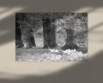 Bankje in het bos van Nella van Zalk