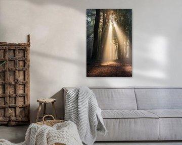 Das magische Licht im Wald von Paul Begijn